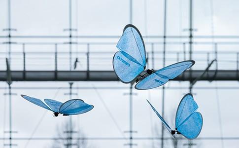 01_eMotionButterflies_00065V2_500px
