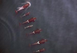Ballenas-Whale-ToDrone-2