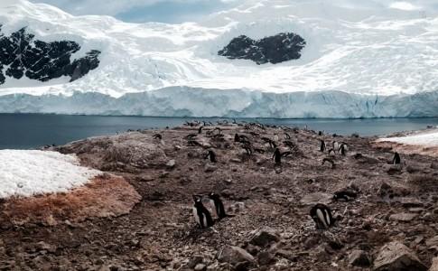 Antártida portada