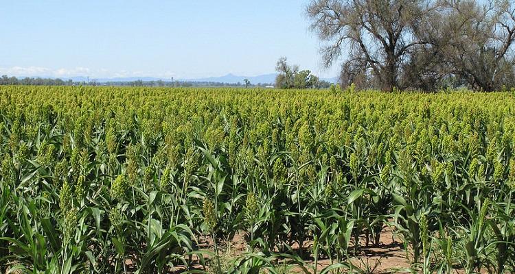 Drones Vs Personas Investigando Los Campos De Cultivo