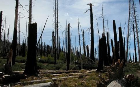 Drones contra deforestación