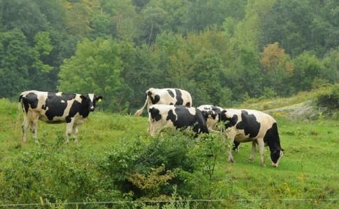drones pastores para vigilar ganado