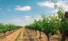 Matarromera SmartRural drones agricultura precisión