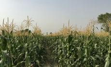 AgPixel agX imaginería alta resolución mejora agricultura de precisión