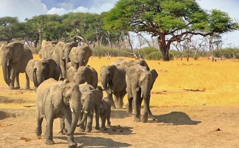 drones pastoreo seguridad elefantes Tanzania