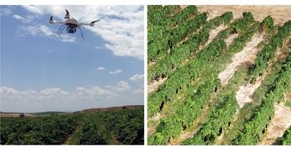 clasificacion viñedos drones